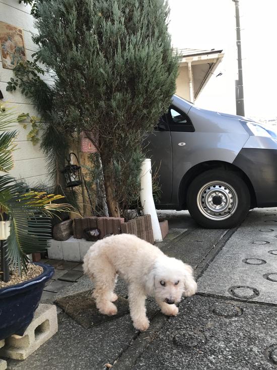 犬のペットシッター Pet sitter of a dog
