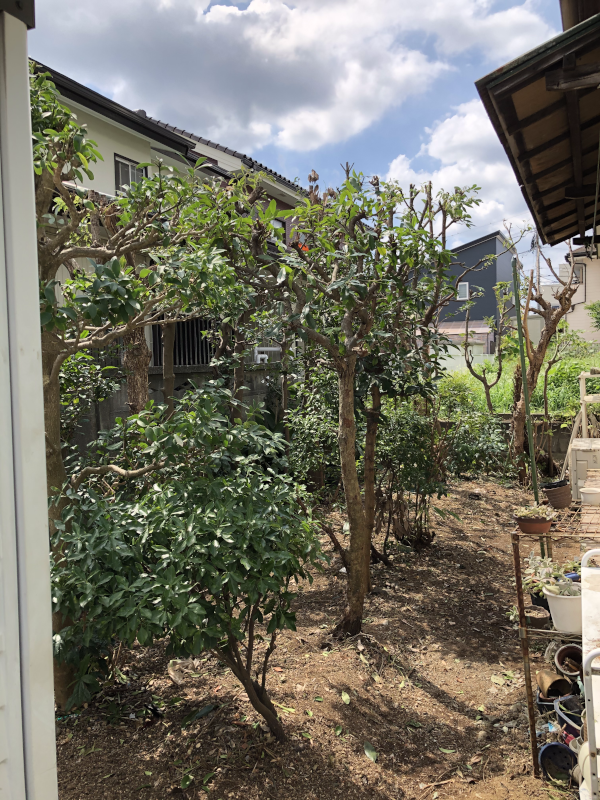 綺麗になった庭