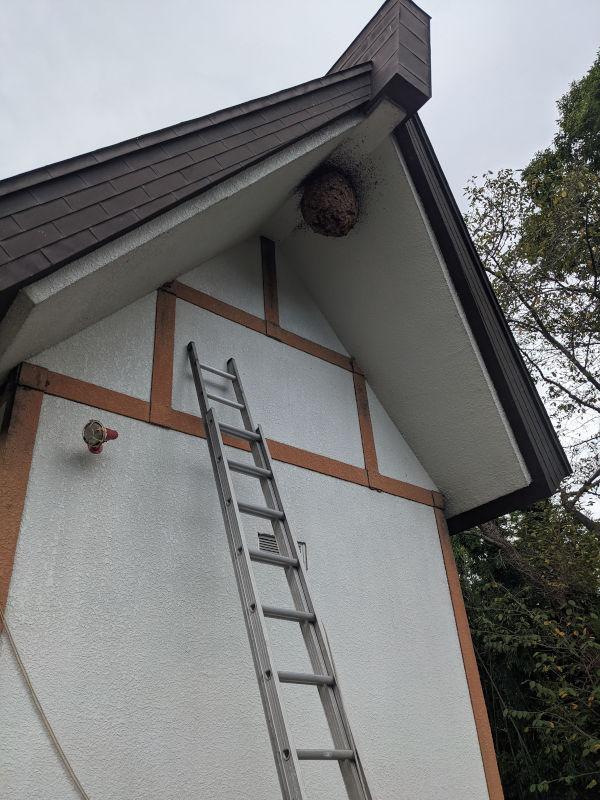 スズメバチの巣駆除